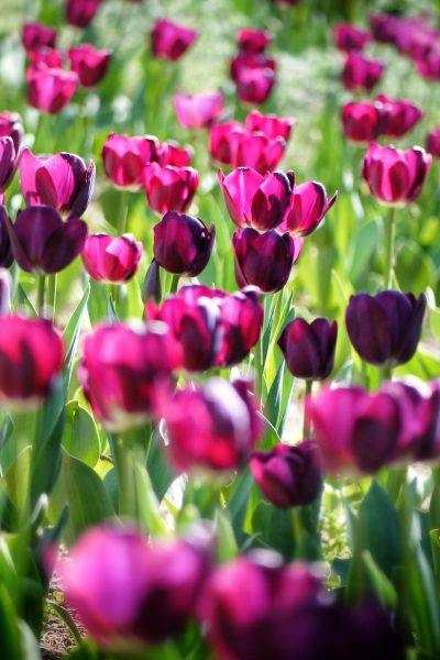backlight-bloom-blooming-53978